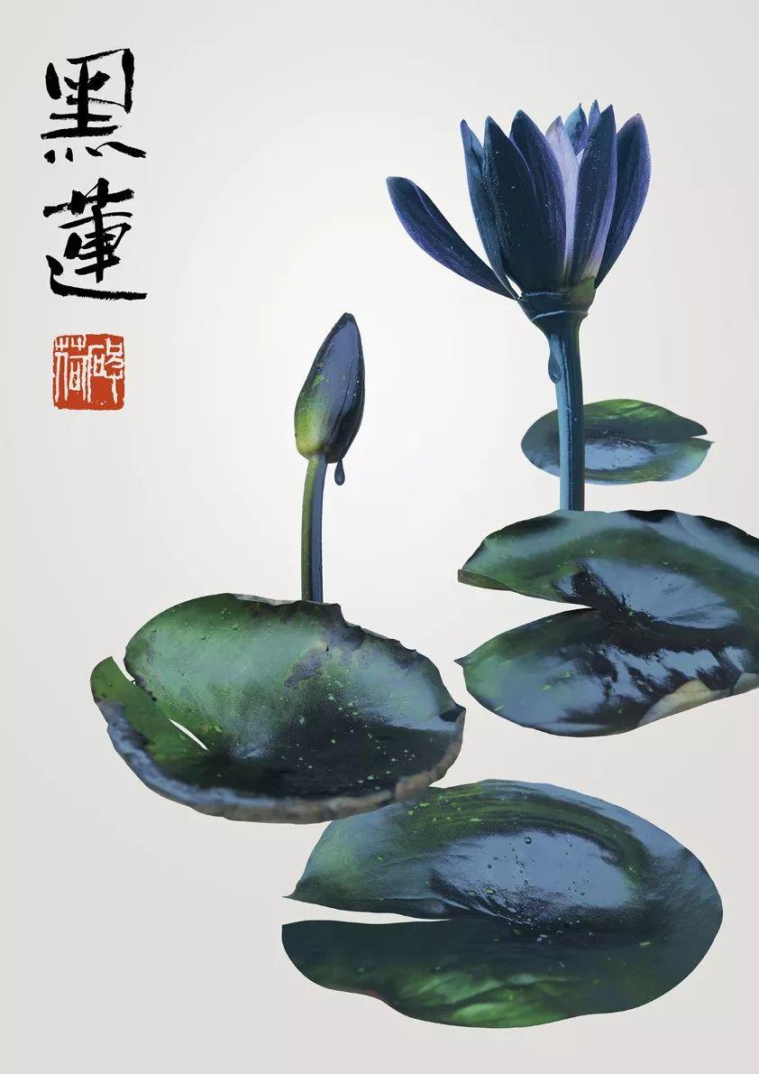 2019年台湾国际平面设计获奖作品